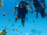 Sharm Elshekh Ester trip