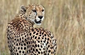 3 Days Spectacular Masai Mara Private Safari Fotos