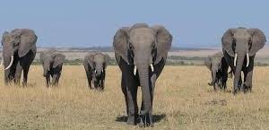 3 Days Maasai Mara Group Joining Safari Fotos
