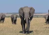 5 Days Masai Mara, Nakuru, Naivasha Group Joining Safari