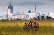 1 Day National Park Extensive Safari