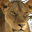 Safariwithedris