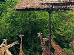 Bangkok : Full Day Tour Safari World - Lunch Included Fotos