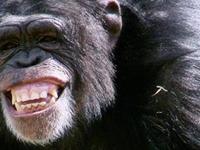 Beautiful Uganda Wildlife Tour
