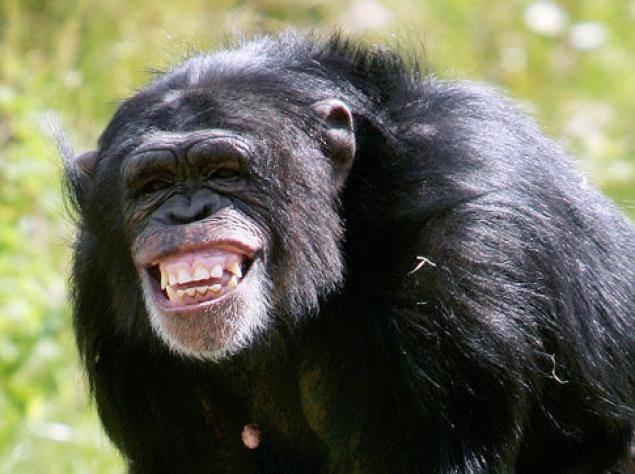 Beautiful Uganda Wildlife Tour Photos