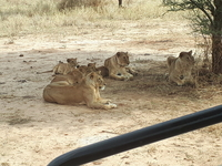 Safarisolestours