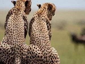 Serengeti And Ngorongoro - 3 Days Camping Tour Photos