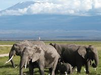 Hakuna Matata Safari