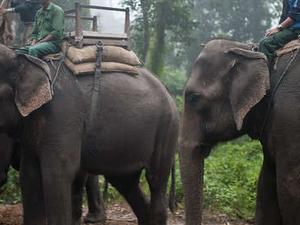Kathmandu Tour & Chitwan Safari Photos