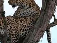 Lonetree Safaris