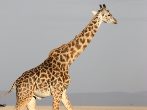 3 Days 2 Nights Masai Mara For Non Residents