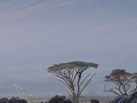 3 Days 2 Nights Amboseli National park
