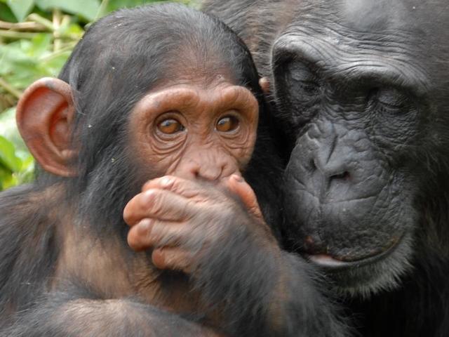 Primates & Wildlife Safari Uganda Photos