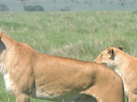 8 Days Kenya and Tanzania Big Five Lodge Safari
