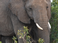 10 Days Discover Kenya Tour in Luxury Lodges