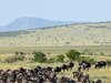 3 Days Masai Mara Migration Safari