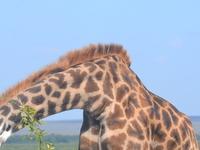13 Days Kenya and Tanzania Exclusive Luxury Safari