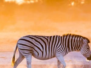 Rainbow Nation - South Africa Fotos