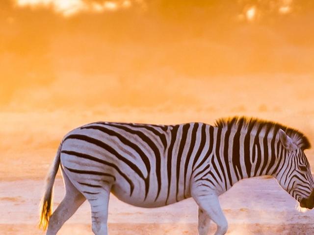Rainbow Nation - South Africa Photos