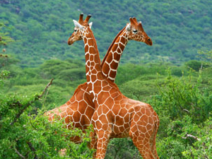 South Africa Tour Package | All Upto 30% Off Photos