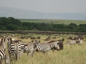 Safari Naivmara Photos