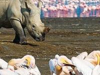 Safari Nakumara