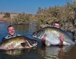 8 Days Uganda Fishing Safari Fotos