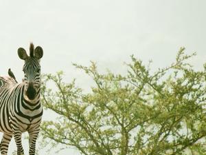 3 Days Lake Mburo Safari and Kampala City Tour Fotos