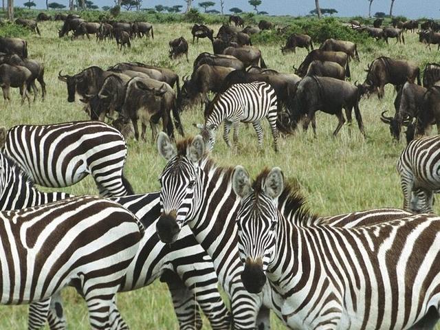 7 Days 6 Nights Amboseli, Aberdare, Lake Nakuru And Masai Mara Photos