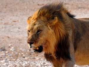 3 Day Etosha National Park (Lodging)