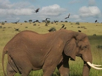 Exciting Photography, Wildlife Safaris & Birding in Uganda