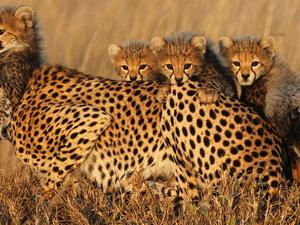 Touch of the North | Tarangire & Serengeti