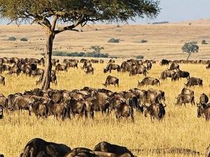 3 Day Masai Mara Group Tour Photos
