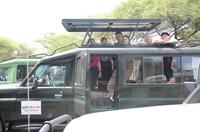 Safari Bando