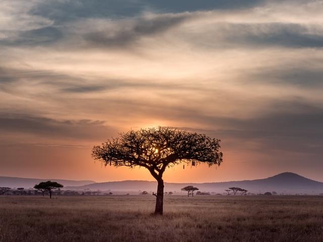 Bush & Beach - Romantic Break - Serengeti+Zanzibar Photos