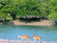 Exclusive Sundarban Tour Packages - Amazon of India