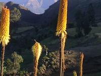Ethiopia Mountain Trekking
