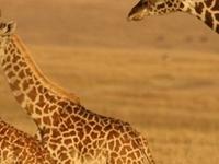 Low Season Deal Masai Mara by Air