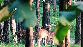 Jungle Love Mogli Tour Fotos