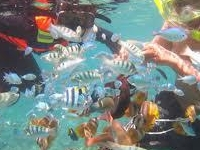 Snorkeling In Thousand Island