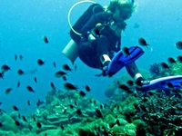 Diving In Lombok Island, Indonesia