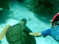 Dont Mess With The Ninja Turtle!!Snorkeling At Cham Islet Hoi An