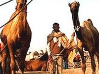 1 Pushkar