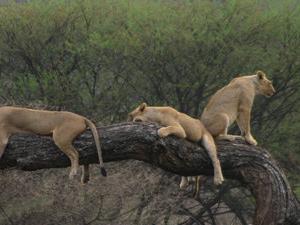 Beauty of Kenya Photos
