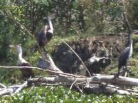 Rresident Birds Along The Banks Of Lake NaivashaN