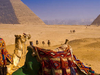 Cairo and Alexandria Highlights Private Tour