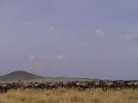 Safari in Arusha