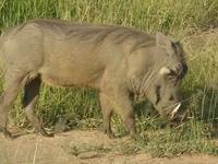 Tanzania Southern Safari