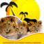 Experience Safaris