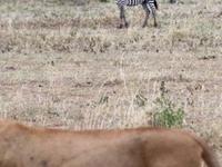 Excursion tour to Ngorongoro Crater